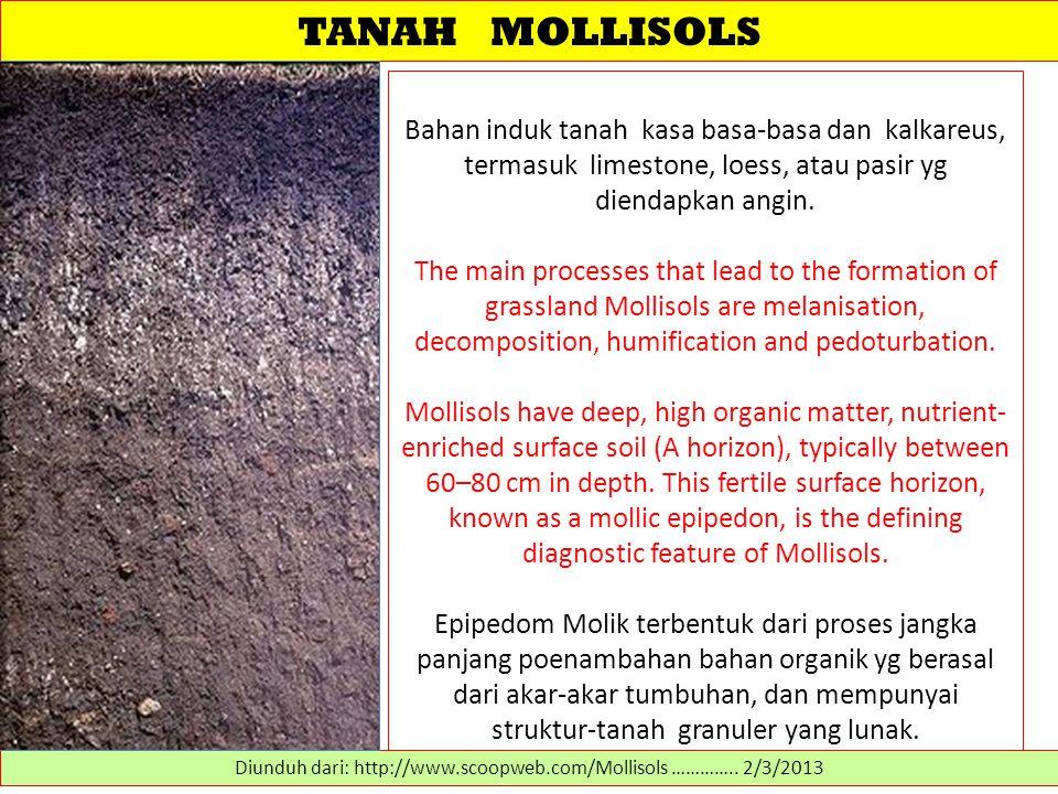 TANAH MOLLISOLS Bahan induk tanah kasa basa-basa dan kalkareus, termasuk limestone, loess, atau pasir yg diendapkan angin.
