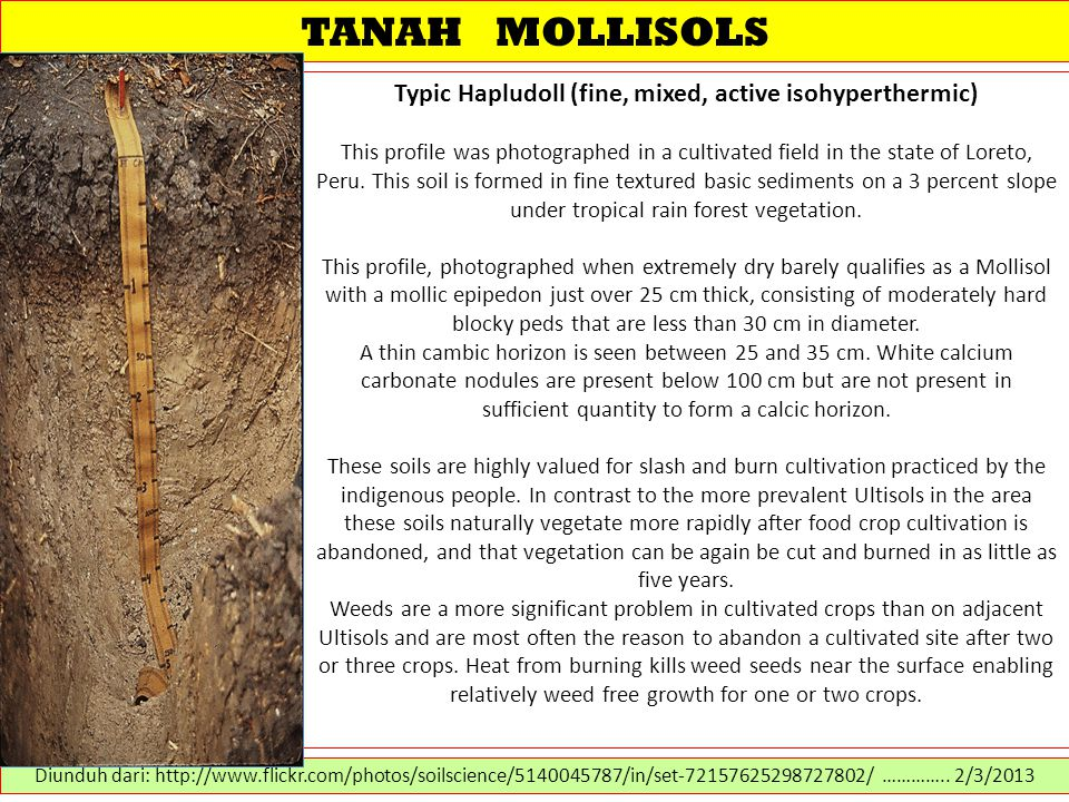 TANAH MOLLISOLS Typic Hapludoll (fine, mixed, active isohyperthermic) This profile was photographed in a cultivated field in the state of Loreto, Peru