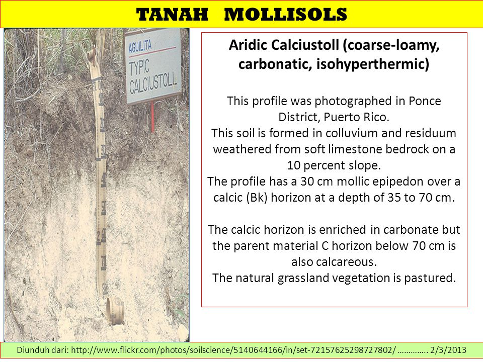 TANAH MOLLISOLS Aridic Calciustoll (coarse-loamy, carbonatic, isohyperthermic) This profile was photographed in Ponce District, Puerto Rico. This soil