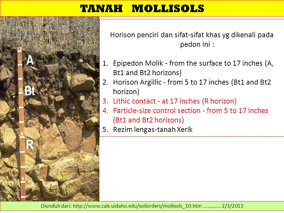 TANAH MOLLISOLS Horison penciri dan sifat-sifat khas yg dikenali pada pedon ini : 1.Epipedon Molik - from the surface to 17 inches (A, Bt1 and Bt2 horizons) 2.Horison Argillic - from 5 to 17 inches (Bt1 and Bt2 horizon) 3.Lithic contact - at 17 inches (R horizon) 4.Particle-size control section - from 5 to 17 inches (Bt1 and Bt2 horizons) 5.Rezim lengas-tanah Xerik Diunduh dari: http://www.cals.uidaho.edu/soilorders/mollisols_10.htm …………..