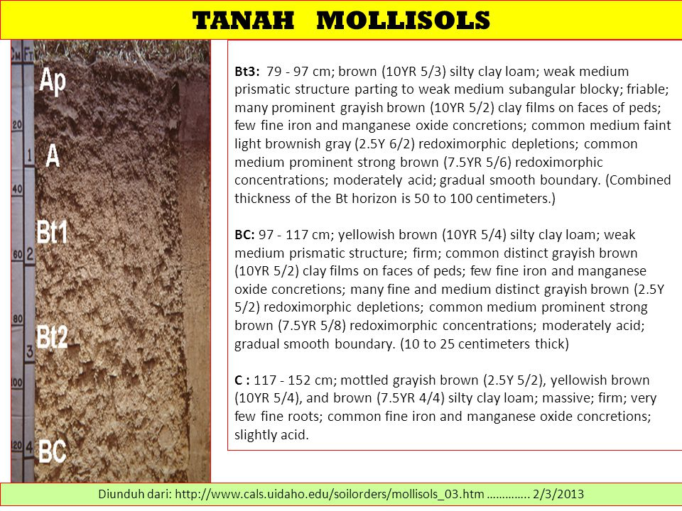 TANAH MOLLISOLS Bt3: 79 - 97 cm; brown (10YR 5/3) silty clay loam; weak medium prismatic structure parting to weak medium subangular blocky; friable;