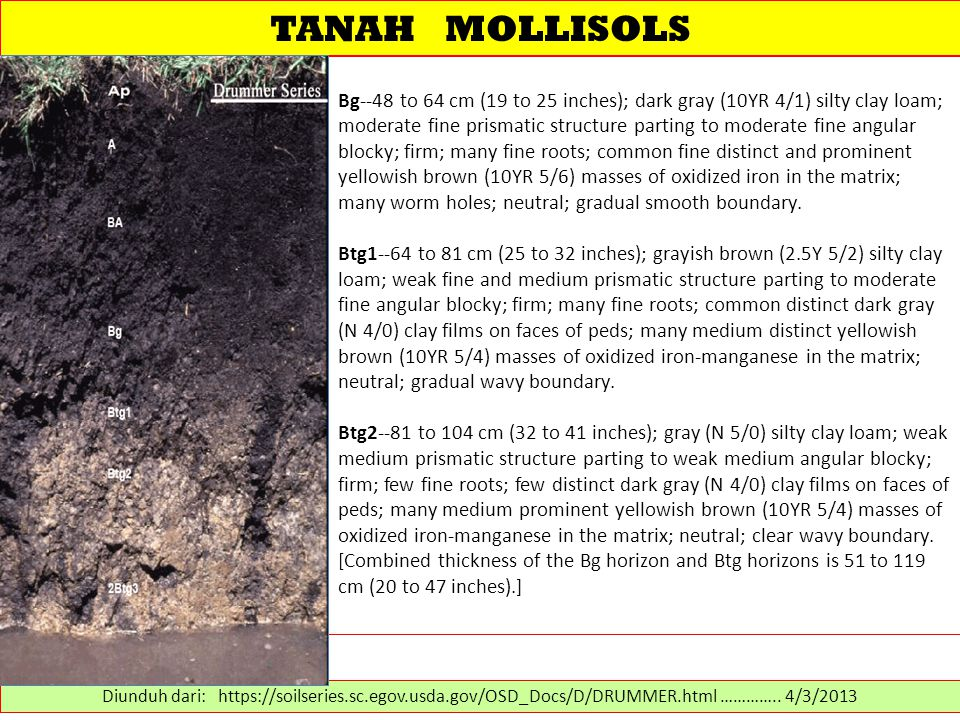 TANAH MOLLISOLS Bg--48 to 64 cm (19 to 25 inches); dark gray (10YR 4/1) silty clay loam; moderate fine prismatic structure parting to moderate fine angular blocky; firm; many fine roots; common fine distinct and prominent yellowish brown (10YR 5/6) masses of oxidized iron in the matrix; many worm holes; neutral; gradual smooth boundary.