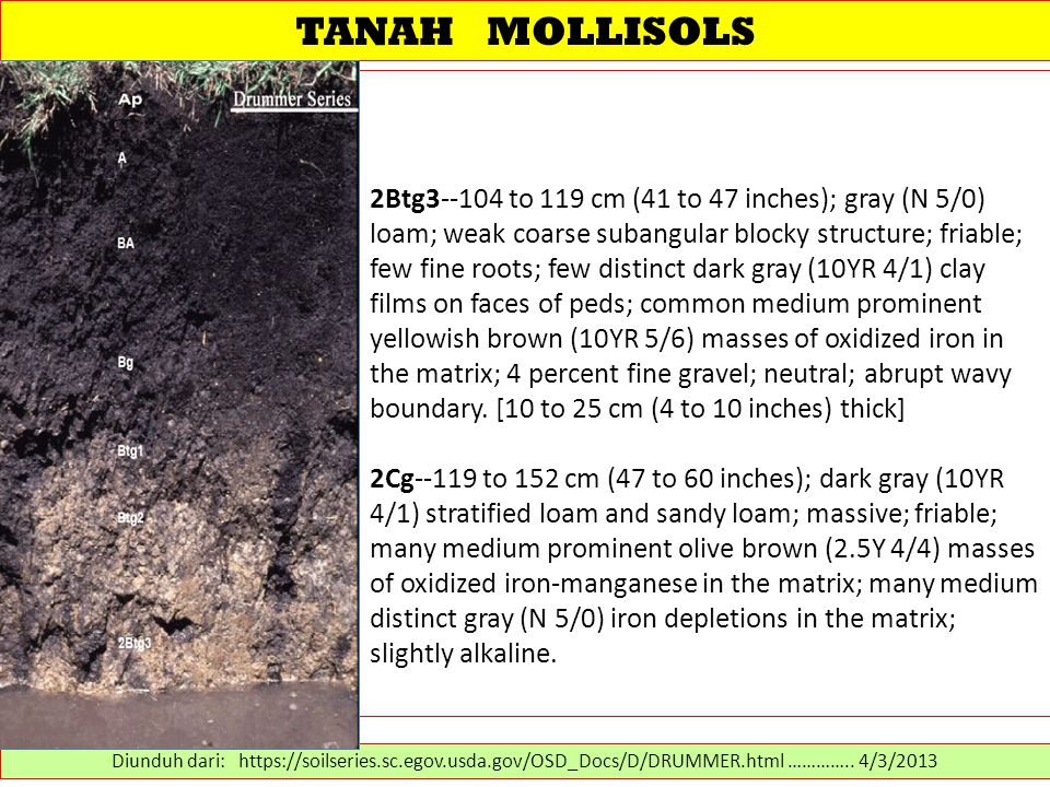 TANAH MOLLISOLS 2Btg3--104 to 119 cm (41 to 47 inches); gray (N 5/0) loam; weak coarse subangular blocky structure; friable; few fine roots; few distinct dark gray (10YR 4/1) clay films on faces of peds; common medium prominent yellowish brown (10YR 5/6) masses of oxidized iron in the matrix; 4 percent fine gravel; neutral; abrupt wavy boundary.