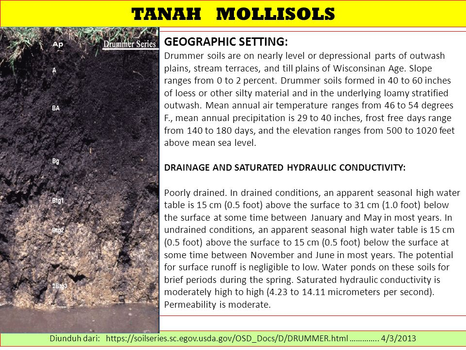 TANAH MOLLISOLS GEOGRAPHIC SETTING: Drummer soils are on nearly level or depressional parts of outwash plains, stream terraces, and till plains of Wisconsinan Age.