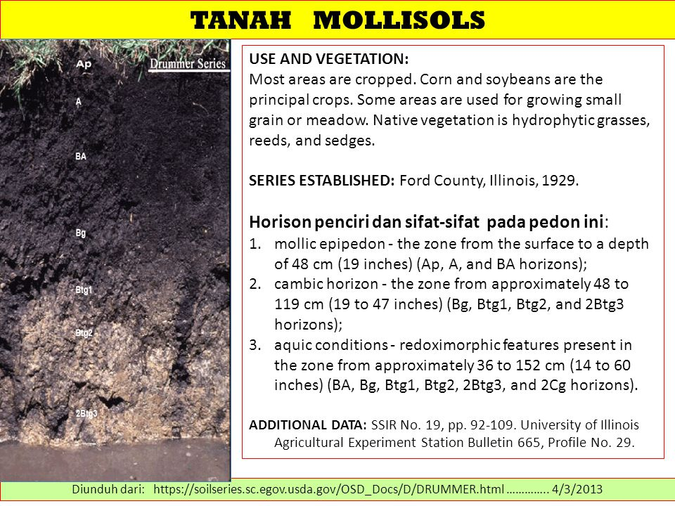 TANAH MOLLISOLS USE AND VEGETATION: Most areas are cropped. Corn and soybeans are the principal crops. Some areas are used for growing small grain or