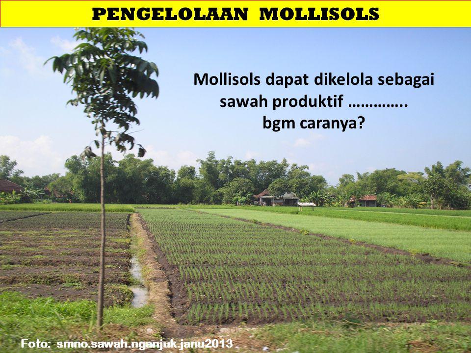 PENGELOLAAN MOLLISOLS Mollisols dapat dikelola sebagai sawah produktif ………….. bgm caranya? Foto: smno.sawah.nganjuk.janu2013