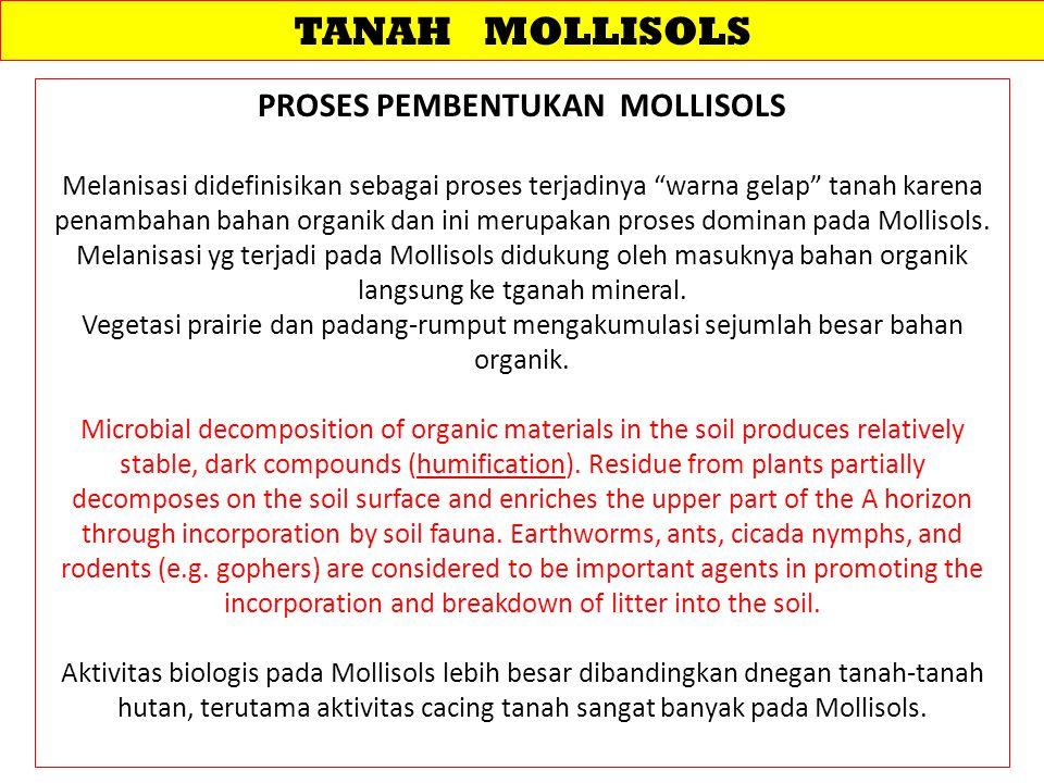 TANAH MOLLISOLS PROSES PEMBENTUKAN MOLLISOLS Melanisasi didefinisikan sebagai proses terjadinya warna gelap tanah karena penambahan bahan organik dan ini merupakan proses dominan pada Mollisols.