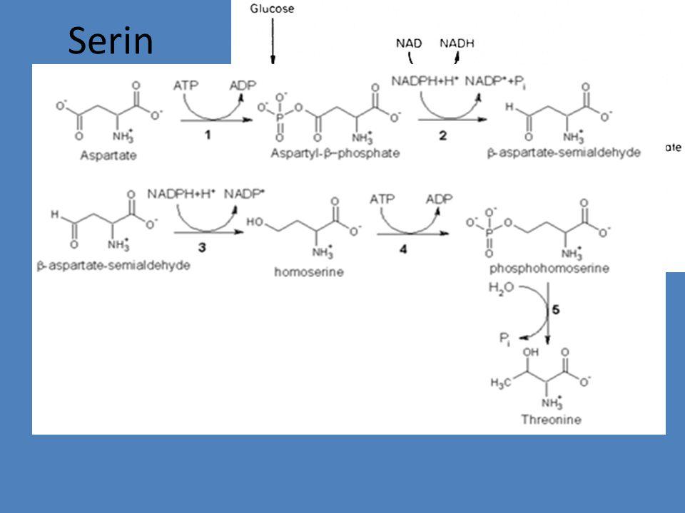 Fenilalanin dan tirosin dari korismat