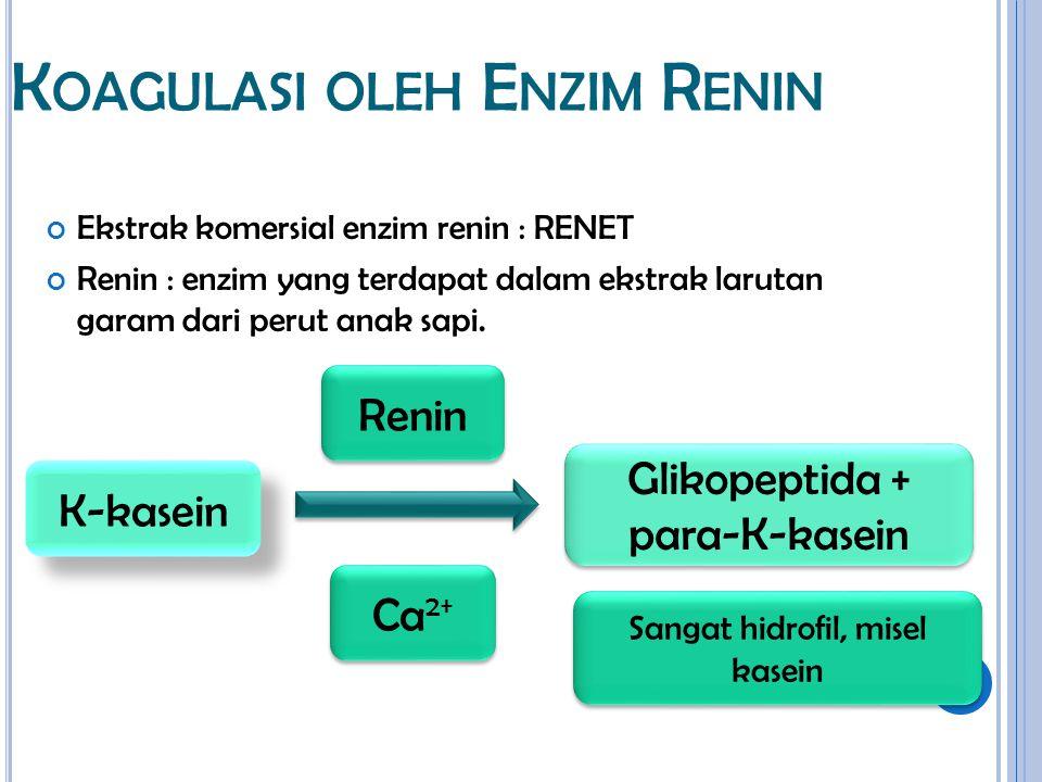 K OAGULASI OLEH E NZIM R ENIN Ekstrak komersial enzim renin : RENET Renin : enzim yang terdapat dalam ekstrak larutan garam dari perut anak sapi. K-ka