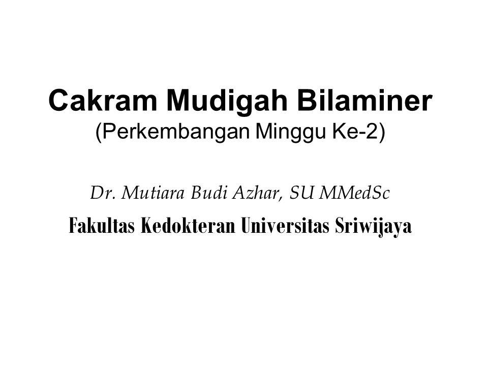 Cakram Mudigah Bilaminer (Perkembangan Minggu Ke-2) Dr.