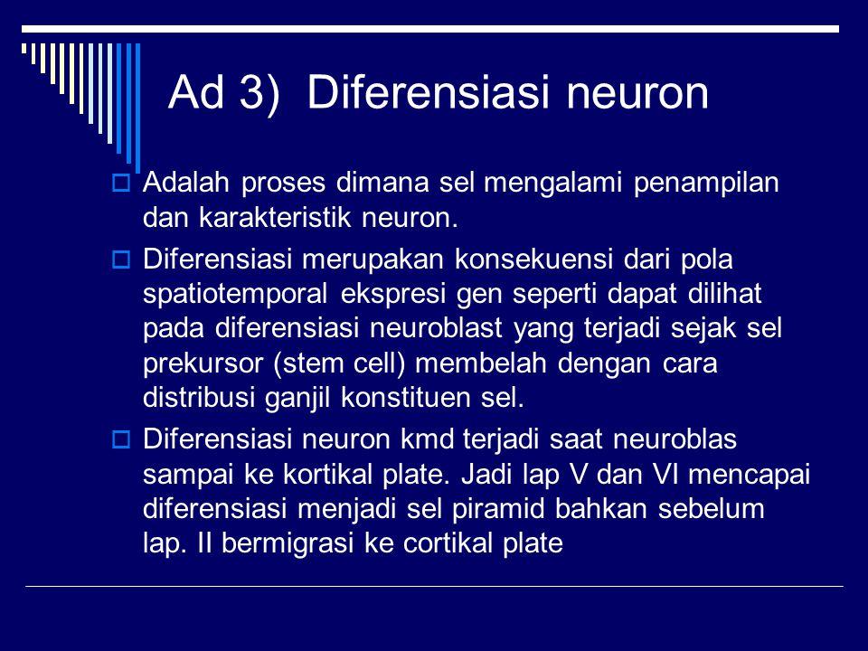 Ad 3) Diferensiasi neuron  Adalah proses dimana sel mengalami penampilan dan karakteristik neuron.  Diferensiasi merupakan konsekuensi dari pola spa