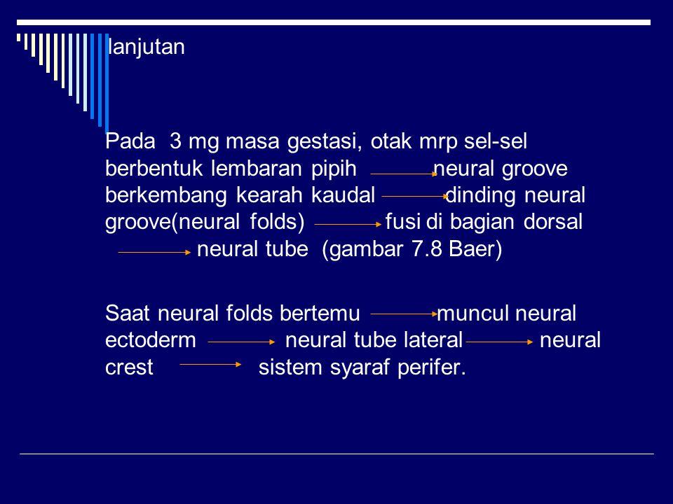 lanjutan Pada 3 mg masa gestasi, otak mrp sel-sel berbentuk lembaran pipih neural groove berkembang kearah kaudal dinding neural groove(neural folds)