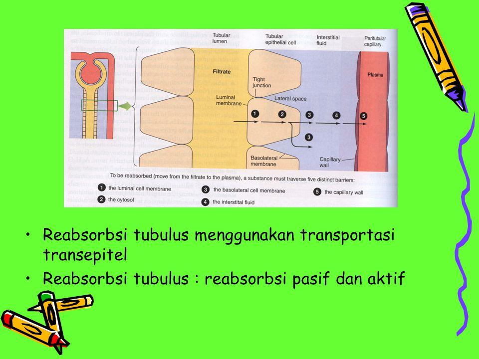 Reabsorbsi tubulus menggunakan transportasi transepitel Reabsorbsi tubulus : reabsorbsi pasif dan aktif
