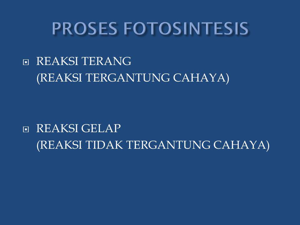  REAKSI TERANG (REAKSI TERGANTUNG CAHAYA)  REAKSI GELAP (REAKSI TIDAK TERGANTUNG CAHAYA)