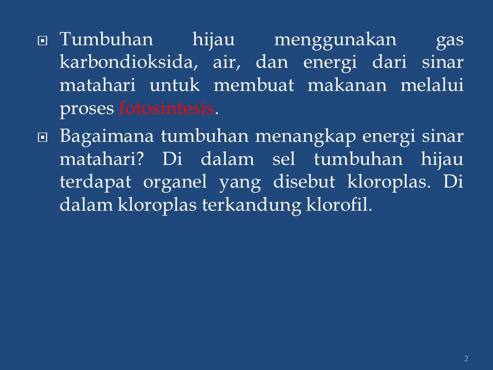 2  Tumbuhan hijau menggunakan gas karbondioksida, air, dan energi dari sinar matahari untuk membuat makanan melalui proses fotosintesis.  Bagaimana