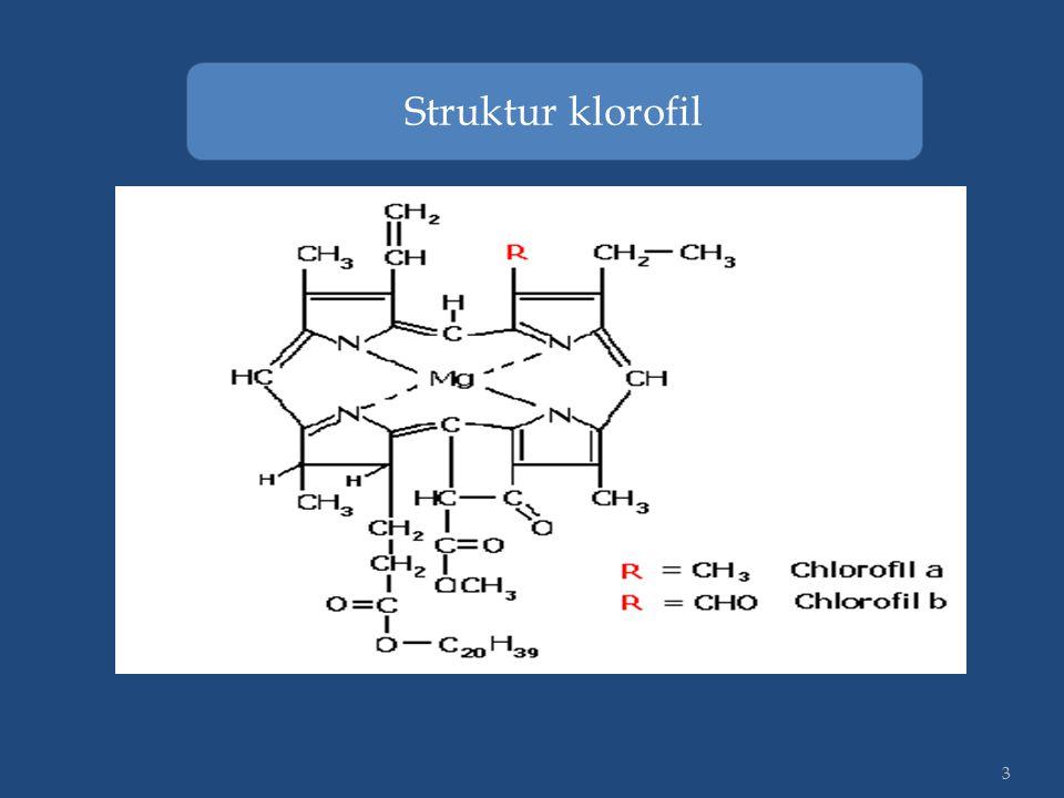 3 Struktur klorofil