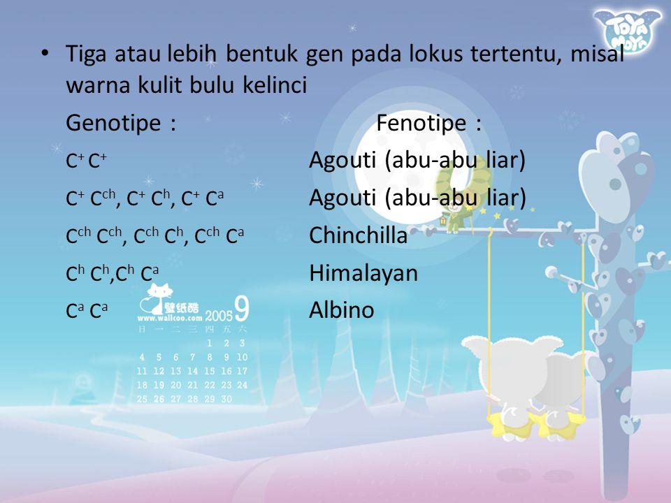Tiga atau lebih bentuk gen pada lokus tertentu, misal warna kulit bulu kelinci Genotipe :Fenotipe : C + C + Agouti (abu-abu liar) C + C ch, C + C h, C