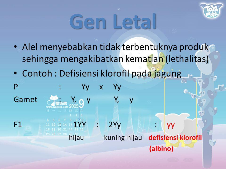 Gen Letal Alel menyebabkan tidak terbentuknya produk sehingga mengakibatkan kematian (lethalitas) Contoh : Defisiensi klorofil pada jagung P:Yy x Yy G