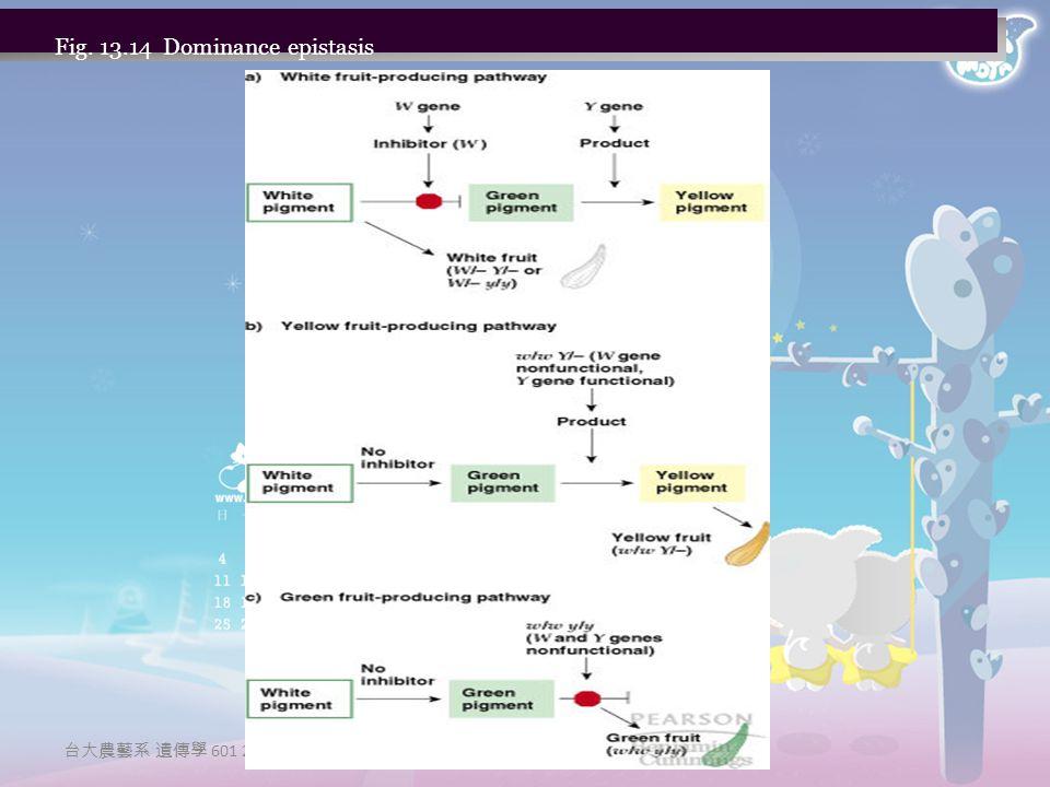 台大農藝系 遺傳學 601 20000 Fig. 13.14 Dominance epistasis