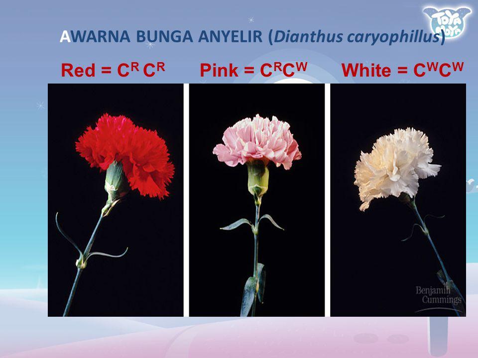 Red = C R C R Pink = C R C W White = C W C W AWARNA BUNGA ANYELIR (Dianthus caryophillus)