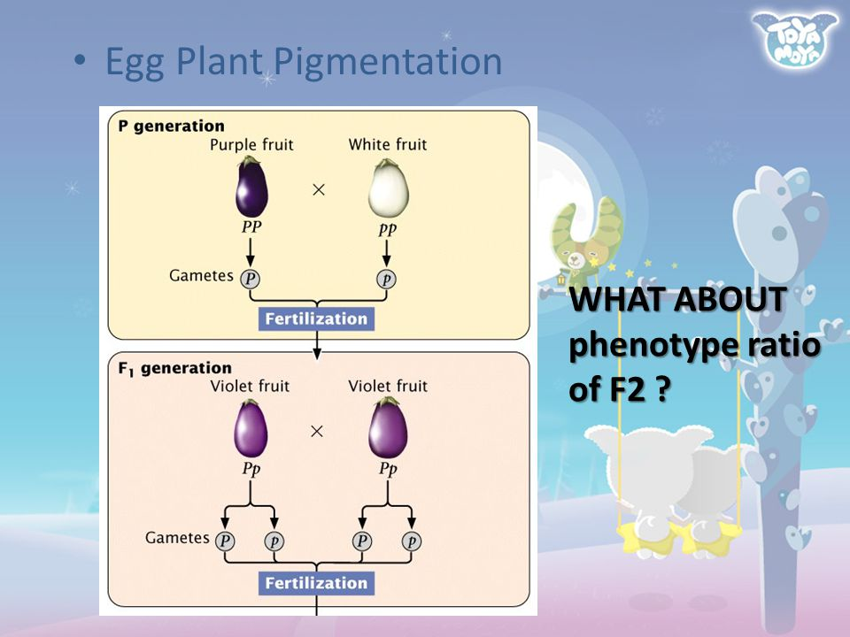 Egg Plant Pigmentation WHAT ABOUT phenotype ratio of F2 ?