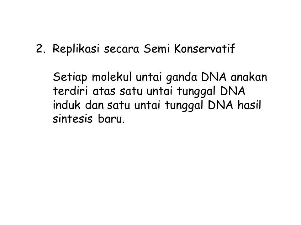 2.Replikasi secara Semi Konservatif Setiap molekul untai ganda DNA anakan terdiri atas satu untai tunggal DNA induk dan satu untai tunggal DNA hasil sintesis baru.
