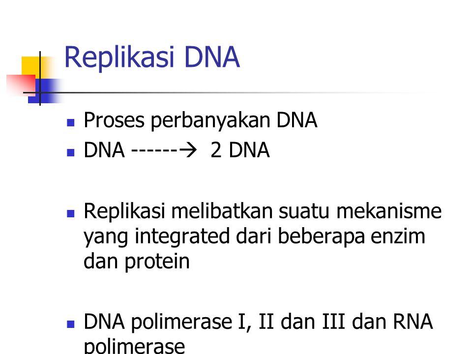 Replikasi DNA Proses perbanyakan DNA DNA ------  2 DNA Replikasi melibatkan suatu mekanisme yang integrated dari beberapa enzim dan protein DNA polim