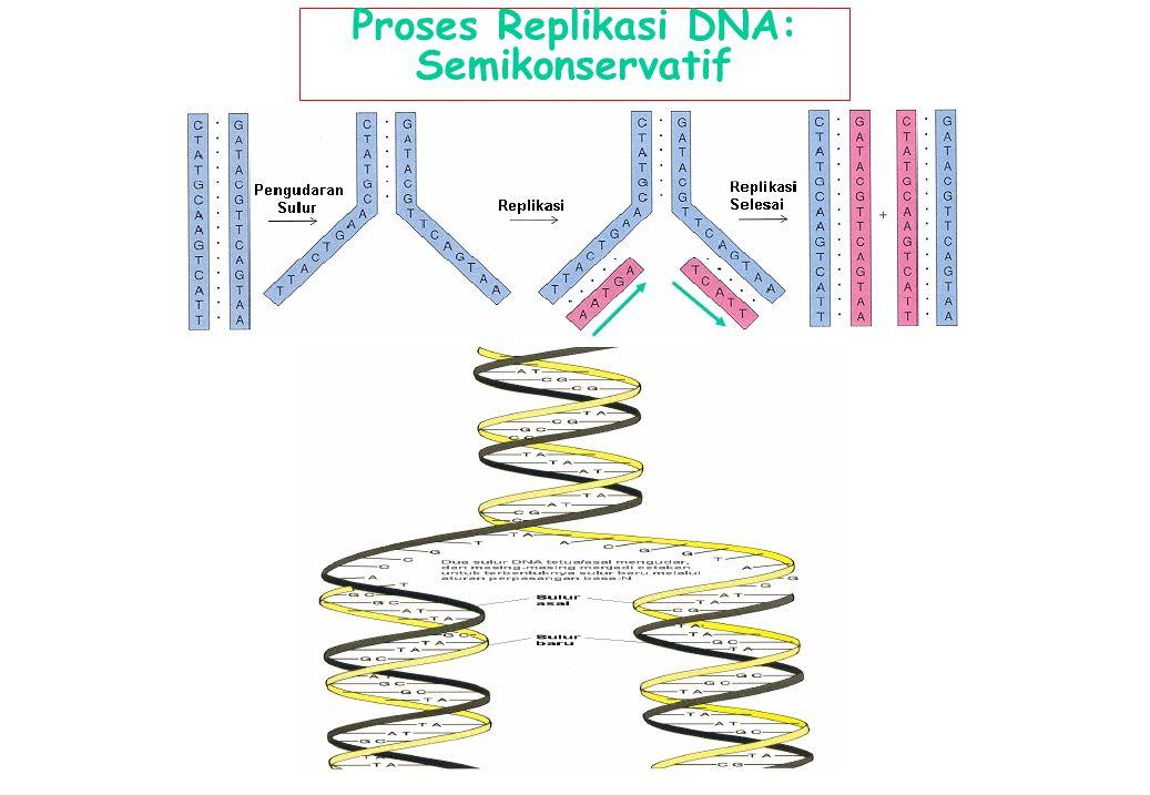 Proses Replikasi DNA: Semikonservatif