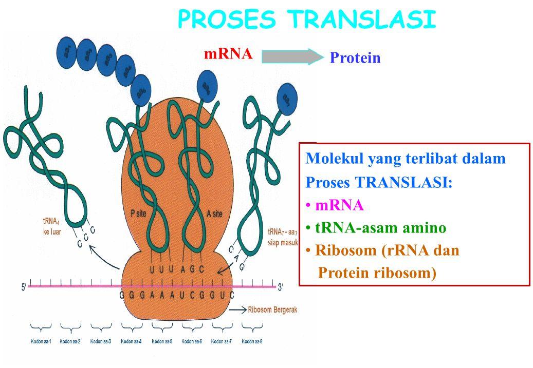 PROSES TRANSLASI mRNA Protein Molekul yang terlibat dalam Proses TRANSLASI: mRNA tRNA-asam amino Ribosom (rRNA dan Protein ribosom)
