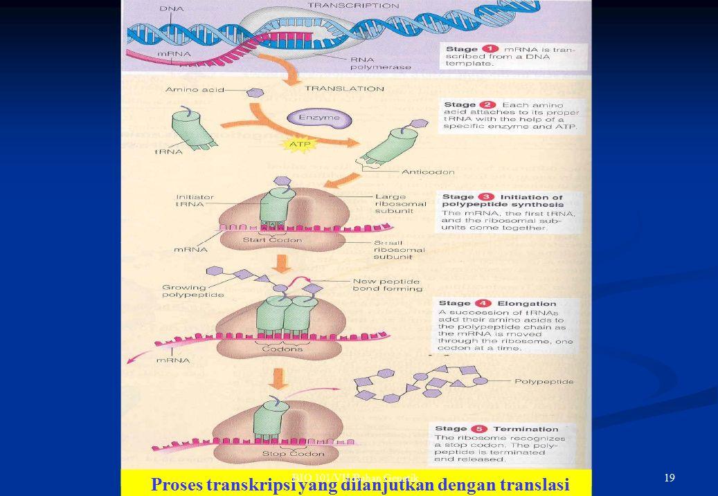 Proses transkripsi yang dilanjutkan dengan translasi 19BIO 101/VII/Bahan Genetik