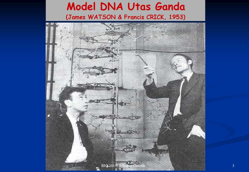 TRANSKRIPSI Heliks/ulir DNA digunakan sebagai model cetakan, dan enzim RNA Polimerase sebagai katalisator Sintesis/transkripsi RNA hanya dari salah satu utas DNA (dari utas DNA cetakan, tidak dari utas DNA pendamping) Sintesis RNA dengan arah 5'P 3'OH (antiparalel dari utas DNA Cetakan)