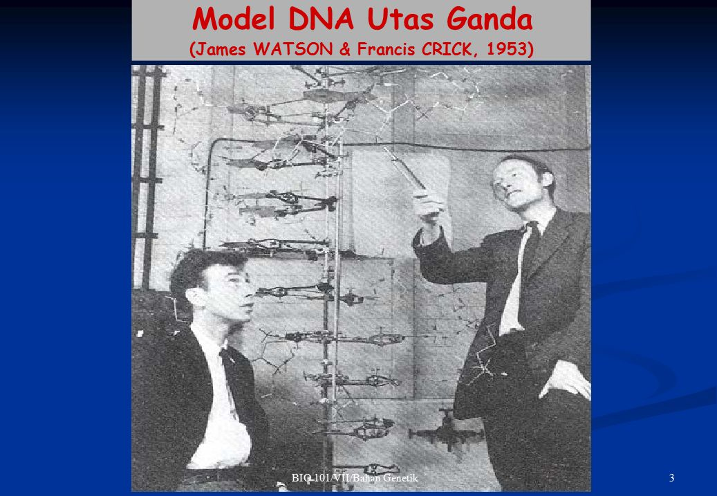 3BIO 101/VII/Bahan Genetik Model DNA Utas Ganda (James WATSON & Francis CRICK, 1953)
