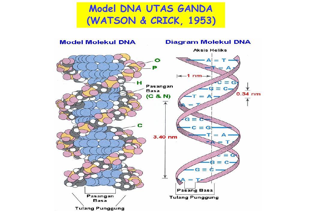 15BIO 101/VII/Bahan Genetik Gen merupakan fragmen DNA yg Menyandikan protein/enzim.