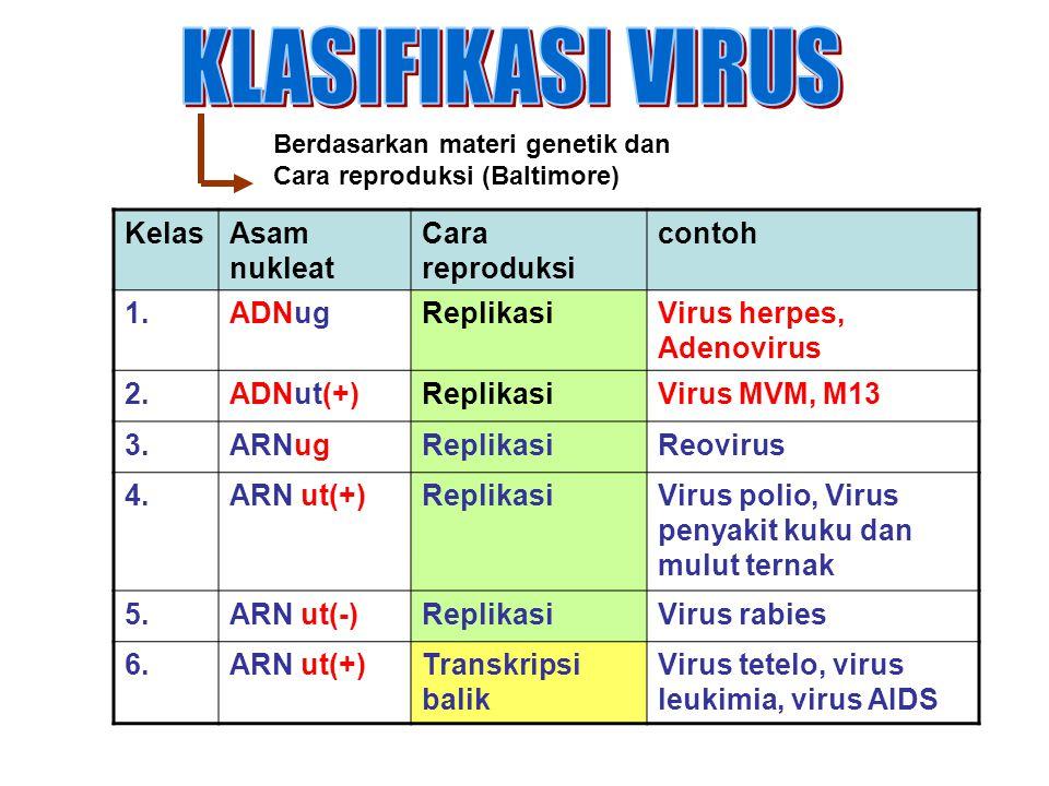 Berdasarkan materi genetik dan Cara reproduksi (Baltimore) KelasAsam nukleat Cara reproduksi contoh 1.ADNugReplikasiVirus herpes, Adenovirus 2.ADNut(+