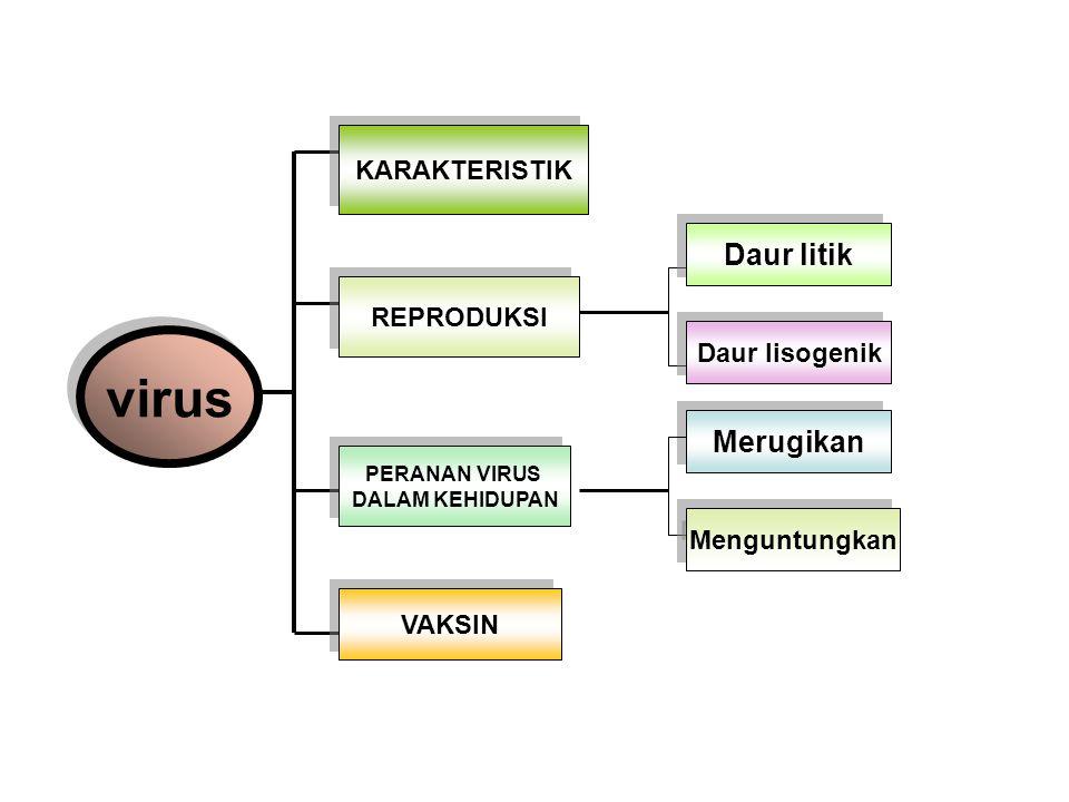 Pelekatan Siklus lisogenik Silkus litik Terinduksi Penetrasi Sintesis Pematangan Pelepasan Penggabungan