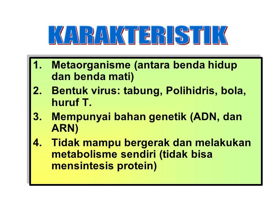1.Metaorganisme (antara benda hidup dan benda mati) 2.Bentuk virus: tabung, Polihidris, bola, huruf T. 3.Mempunyai bahan genetik (ADN, dan ARN) 4.Tida