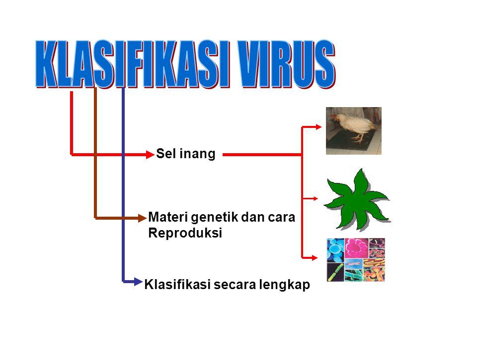 Berdasarkan materi genetik dan Cara reproduksi (Baltimore) KelasAsam nukleat Cara reproduksi contoh 1.ADNugReplikasiVirus herpes, Adenovirus 2.ADNut(+)ReplikasiVirus MVM, M13 3.ARNugReplikasiReovirus 4.ARN ut(+)ReplikasiVirus polio, Virus penyakit kuku dan mulut ternak 5.ARN ut(-)ReplikasiVirus rabies 6.ARN ut(+)Transkripsi balik Virus tetelo, virus leukimia, virus AIDS