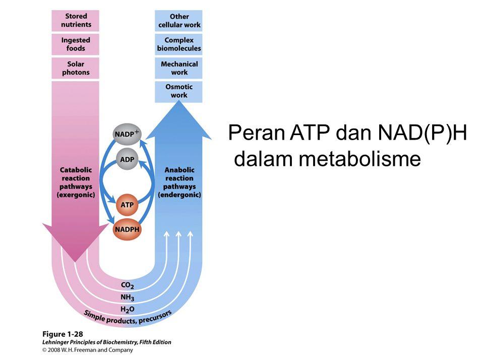 Peran ATP dan NAD(P)H dalam metabolisme