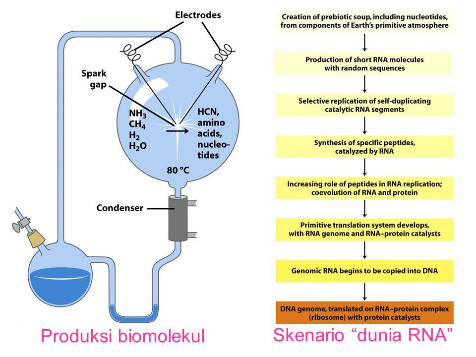 """Produksi biomolekul Skenario """"dunia RNA"""""""