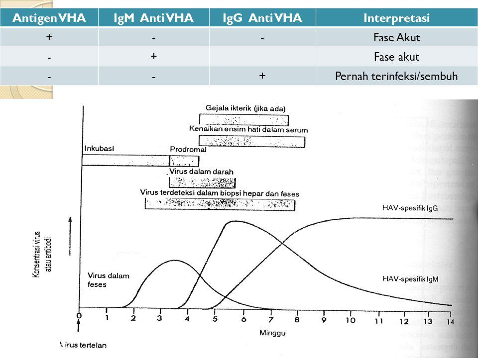 Antigen VHAIgM Anti VHAIgG Anti VHAInterpretasi +--Fase Akut -+Fase akut --+Pernah terinfeksi/sembuh