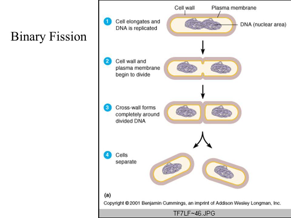 Binary Fission