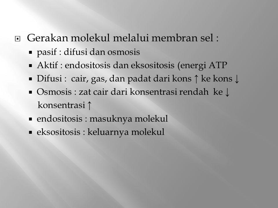  Gerakan molekul melalui membran sel :  pasif : difusi dan osmosis  Aktif : endositosis dan eksositosis (energi ATP  Difusi : cair, gas, dan padat dari kons ↑ ke kons ↓  Osmosis : zat cair dari konsentrasi rendah ke ↓ konsentrasi ↑  endositosis : masuknya molekul  eksositosis : keluarnya molekul