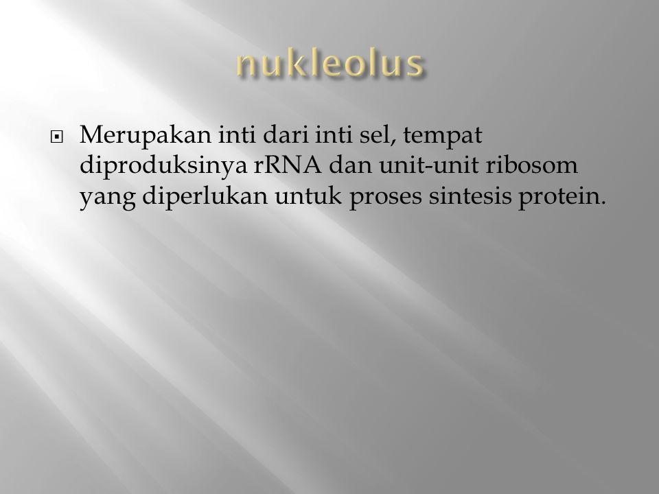  Merupakan inti dari inti sel, tempat diproduksinya rRNA dan unit-unit ribosom yang diperlukan untuk proses sintesis protein.