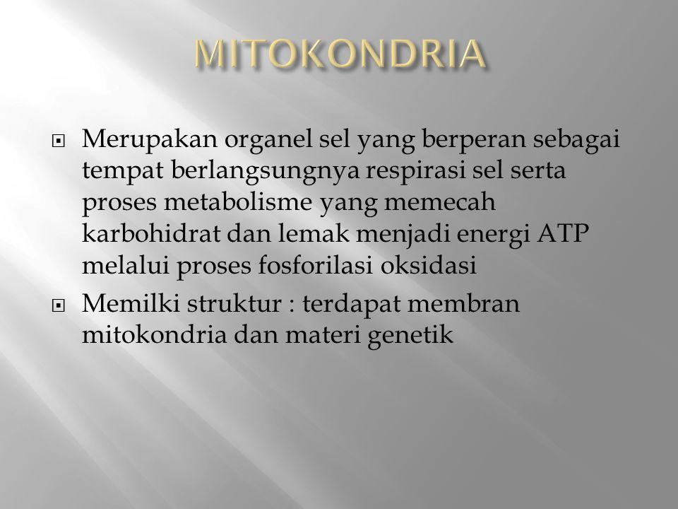  Merupakan organel sel yang berperan sebagai tempat berlangsungnya respirasi sel serta proses metabolisme yang memecah karbohidrat dan lemak menjadi energi ATP melalui proses fosforilasi oksidasi  Memilki struktur : terdapat membran mitokondria dan materi genetik