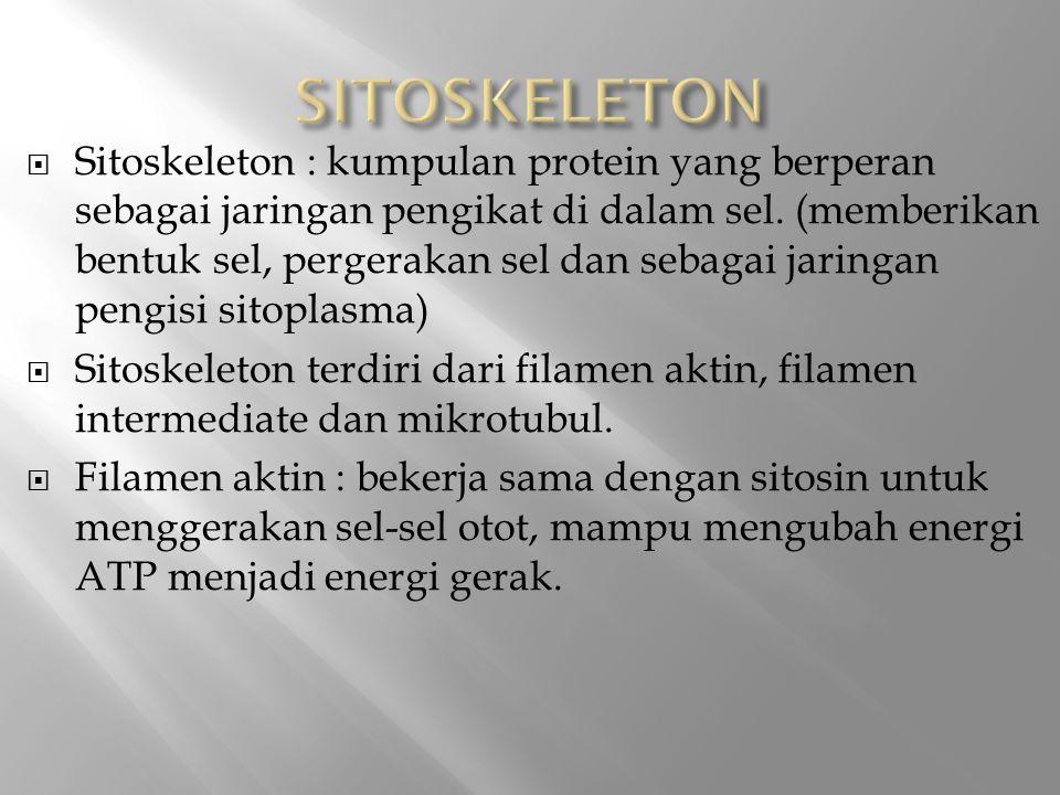  Sitoskeleton : kumpulan protein yang berperan sebagai jaringan pengikat di dalam sel.