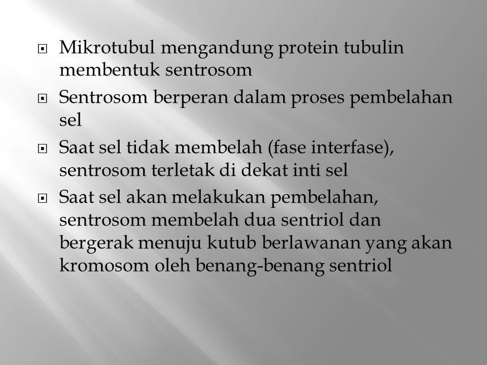  Mikrotubul mengandung protein tubulin membentuk sentrosom  Sentrosom berperan dalam proses pembelahan sel  Saat sel tidak membelah (fase interfase), sentrosom terletak di dekat inti sel  Saat sel akan melakukan pembelahan, sentrosom membelah dua sentriol dan bergerak menuju kutub berlawanan yang akan kromosom oleh benang-benang sentriol