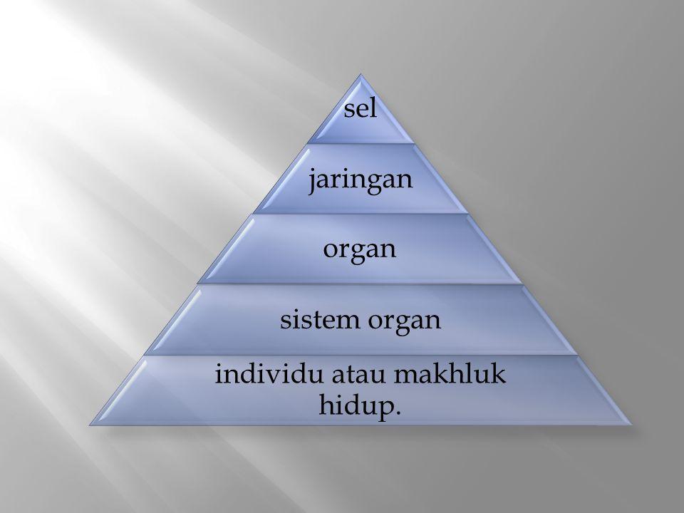 sel jaringan organ sistem organ individu atau makhluk hidup.