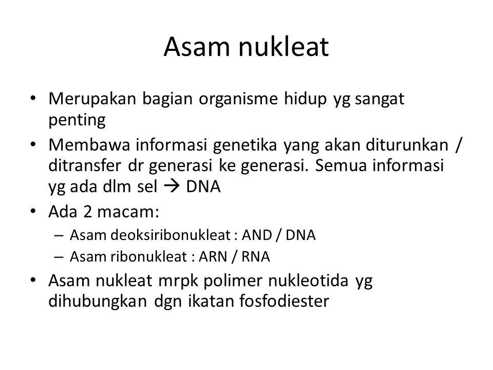 Asam nukleat Merupakan bagian organisme hidup yg sangat penting Membawa informasi genetika yang akan diturunkan / ditransfer dr generasi ke generasi.