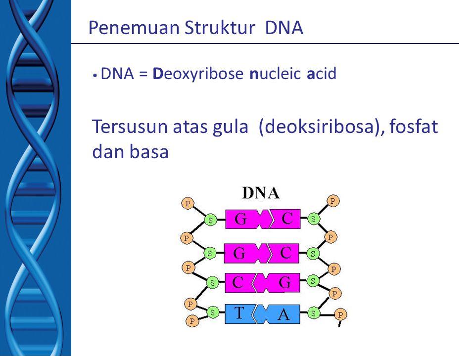 Penemuan Struktur DNA DNA = Deoxyribose nucleic acid Tersusun atas gula (deoksiribosa), fosfat dan basa