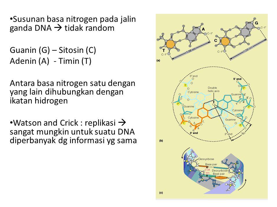 Susunan basa nitrogen pada jalin ganda DNA  tidak random Guanin (G) – Sitosin (C) Adenin (A) - Timin (T) Antara basa nitrogen satu dengan yang lain d
